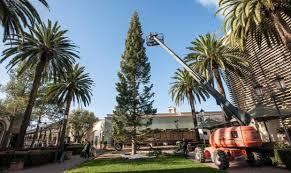 fashion island u0027s christmas tree arrives without any mishaps this