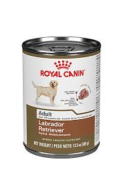 labrador retriever dry dog food royal canin breed health