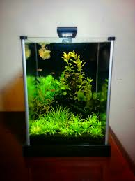 my planted nano tanks and 15 000 gallon koi pond i u0027m open to any