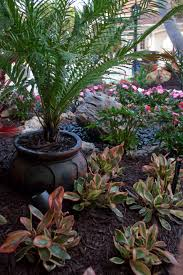 Flowers In Bradenton Fl - landscape plants and flowers for landscaping design in sarasota