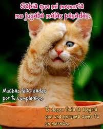 Mere Cat Meme - pin by rosa vasquez on tarjetas pinterest