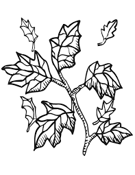 printable pictures of leaves 347272