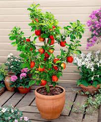 buy fruit trees online bakker com