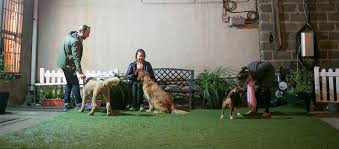 what is the dog show on thanksgiving for the dogs positive and humane dog training located in nyc