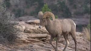 Utah wild animals images Canyonlands national park utah usa hd stock video 389 433 jpg