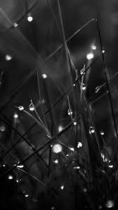 crystal light wallpapers dark dew morning leafy grass landscape iphone 5s wallpaper
