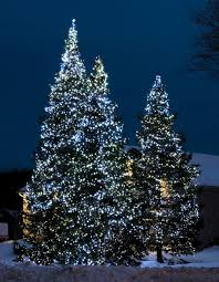 Hanging Tree Lights by Tips For Hanging Outdoor Christmas Lights Use Led Lighting Use