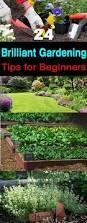 flower garden plans for beginners 24 brilliant gardening tips for beginners gardens garden ideas