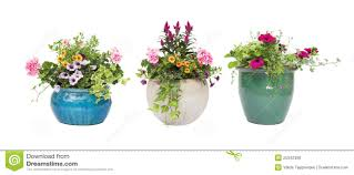 spring summer flower pots isolated on white royalty free stock