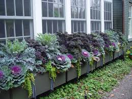 Fall Vegetable Garden Ideas by 2295 Best Garden Images On Pinterest Plants Vertical Gardens