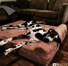 Great Dane Home Decor Best 25 Great Dane Bed Ideas On Pinterest Wood Dog Rustic Intended