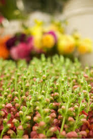 Wholesale Flowers Jesus Barajas Wholesale Flowers U2014 Southern California Flower Market