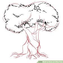 how to draw an olive tree 6 steps with pictures wikihow