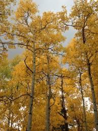 kenosha pass colorado u0027s place fall colors