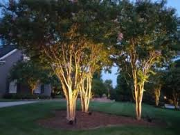 Outdoor Up Lighting For Trees Top 5 Trees For Southport Tree Lighting Outdoor Lighting