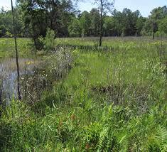native prairie plants north carolina native plants society trip features