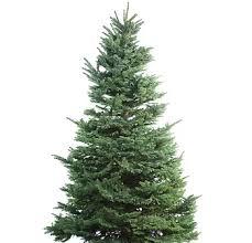 alaska mill and feed christmas trees