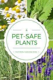 17 best images about dog friendly plants on pinterest ticks