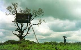 amazing tree house wallpapers life insurance canada