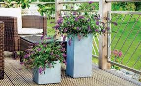 flieder balkon sommerflieder als kübelpflanze mein schöner garten