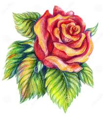 pencil sketch of rose flower archives pencil drawing collection
