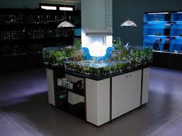vasche acquario vasche per acquari artigianali fantail