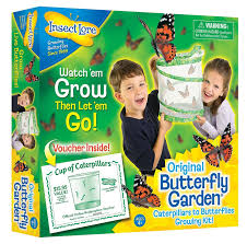 amazon com insect lore butterfly growing kit toy includes