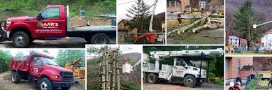 tree trimming service in clinton county pa tree removal