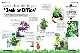 low light plants for office low maintenance office plants good office plants cool office