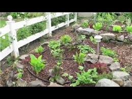 tomato gardening how to use an epsom salt mix as a fertilizer