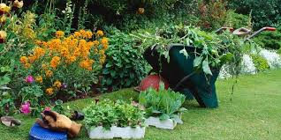 Plant Pests And Diseases - how to keep your plants free from pests and diseases