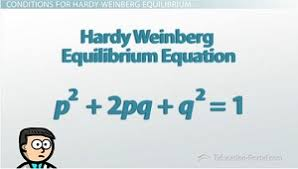 hardy weinberg equilibrium ii the equation video u0026 lesson