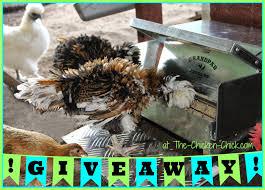 Backyard Chicken Blog by The Chicken October 2014