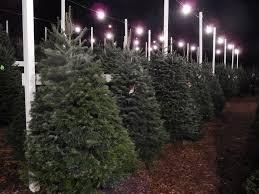 Washington Christmas Tree Farms - christmas trees clayton valley pumpkin farm u0026 christmas trees