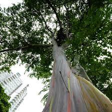 trees sg