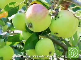 Planting Fruit Trees In Backyard Episode 313 Backyard Orchards Growing A Greener World