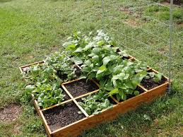 Small Vegetable Garden Ideas Pictures Small Square Foot Backyard Vegetable Garden House Design With Wire