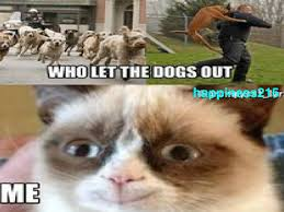 Who Let The Dogs Out Meme - scratch search