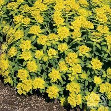 88 best plant wish list images on pinterest flowers garden