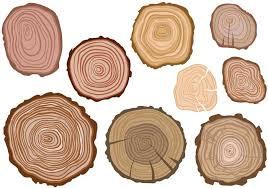 wood tree rings images Free tree rings vectors download free vector art stock graphics jpg