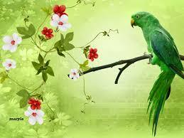 sp734 green parrots wallpapers green parrots backgrounds in best