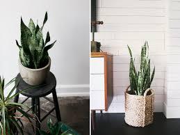 plante dans la chambre quelles plantes choisir dans sa chambre miliboo