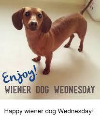 Wiener Dog Meme - eno wiener dog wednesday happy wiener dog wednesday meme on me me