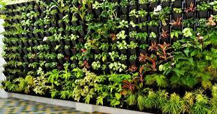 How To Plant Vertical Garden - vertical garden view specifications u0026 details of vertical