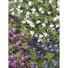 shop annuals at lowes com