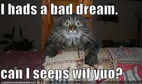 Scared Cat Meme - i hads a bad dream can i seeps wif yuo funny scared cat meme