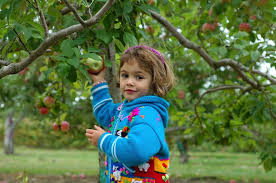 7 places to go apple picking or tasting in washington parentmap