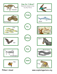 science animals worksheet 3 match the animals to the way they move
