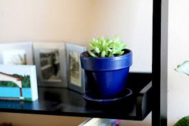cactus home decor decorate your home with houseplants without spending a fortune