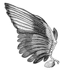 vintage clip art image feather wings for angels the graphics